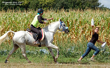 Riders and Trainers