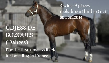 Udjess de Bozouls, for the first time available for breeding in France
