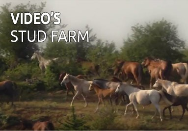 Video's Stud Farm